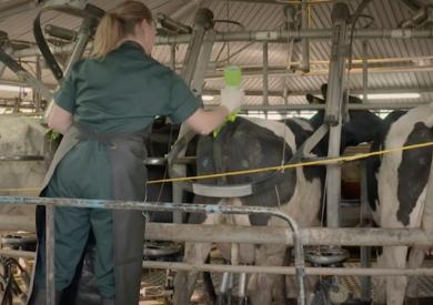 Dairy Fertility