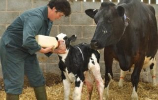 Manage that Colostrum