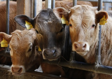 5 ways to improve beef housing