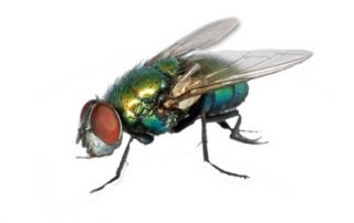 Fly - Fly Control