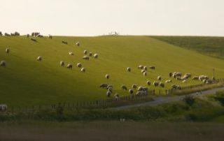 Cobalt Deficiency In Lambs