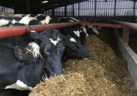 Worming Cattle