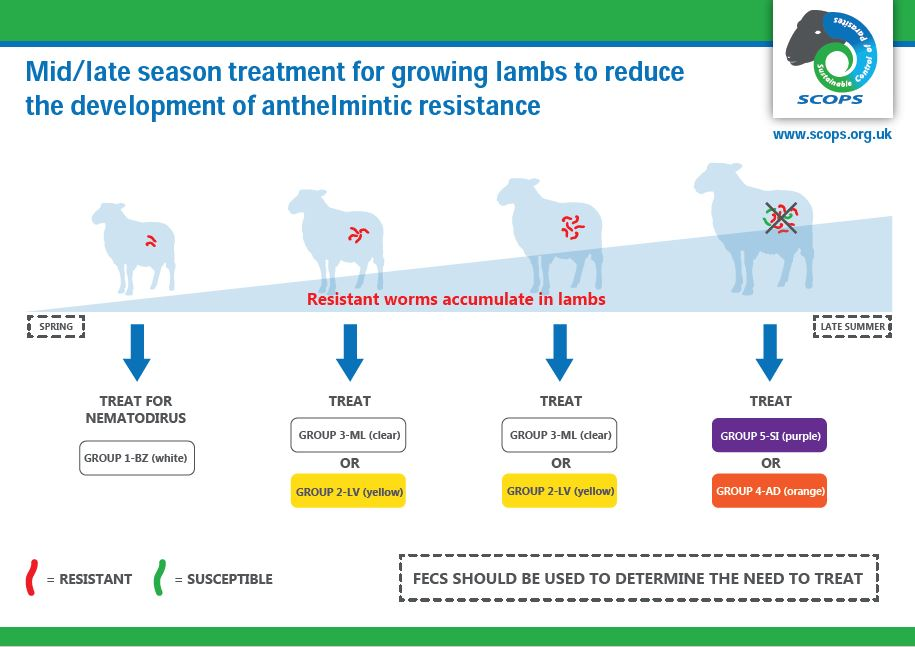 Worm treatment for lambs