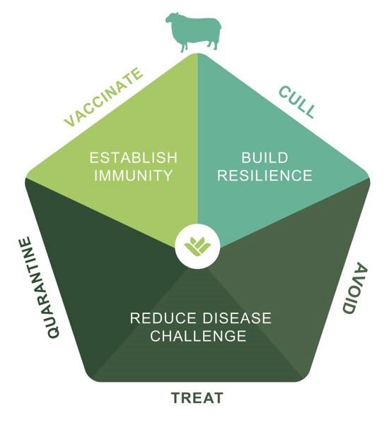 MSD Sheep Lameness 5 Point Plan