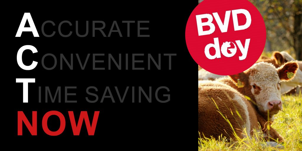 BVD Day Website Banner